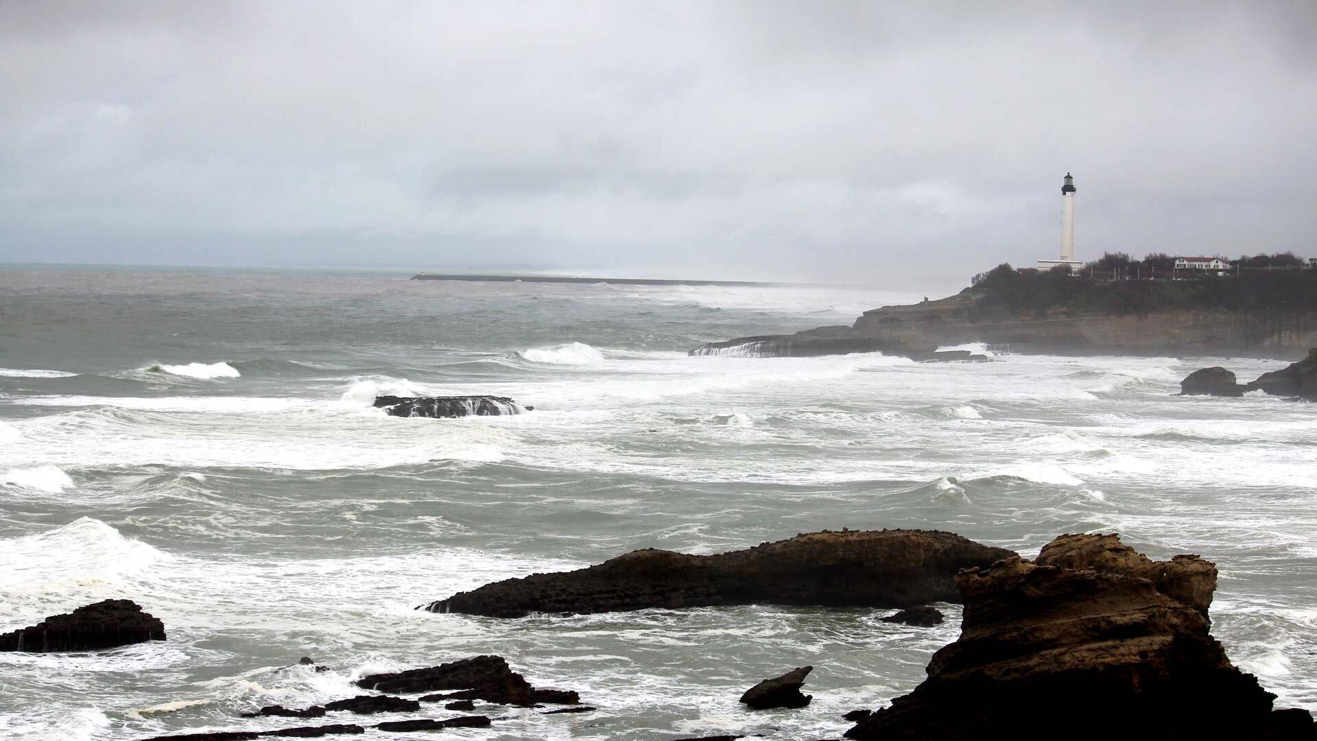 Alexandra Jammet, surf, road-trip, Nouvelle-Aquitaine, côte, océan, littoral, écologie, pollution écosystème, changement climatique, biodiversité, dauphin, cétacés échoués