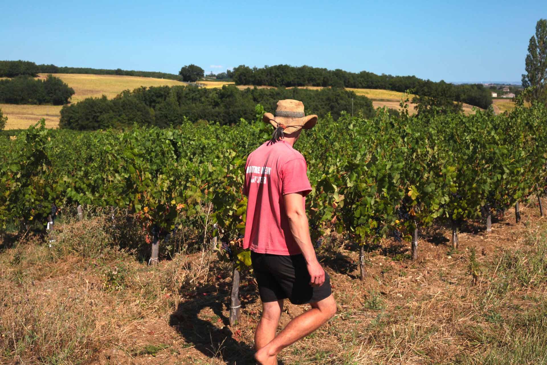 Charles marche pieds nus au milieu de ses vignes