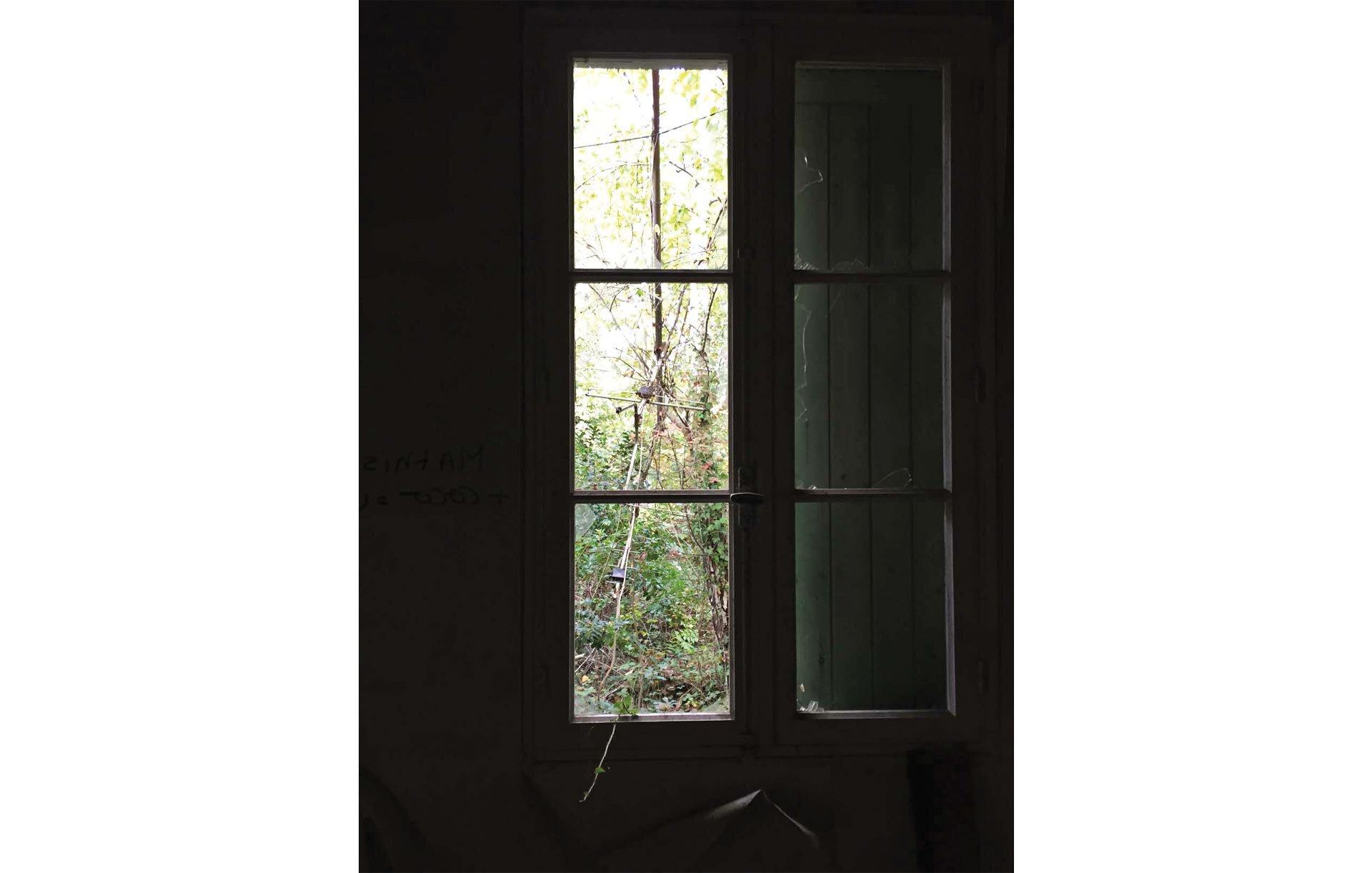 Plante pénétrant dans une pièce par une fenêtre brisée.