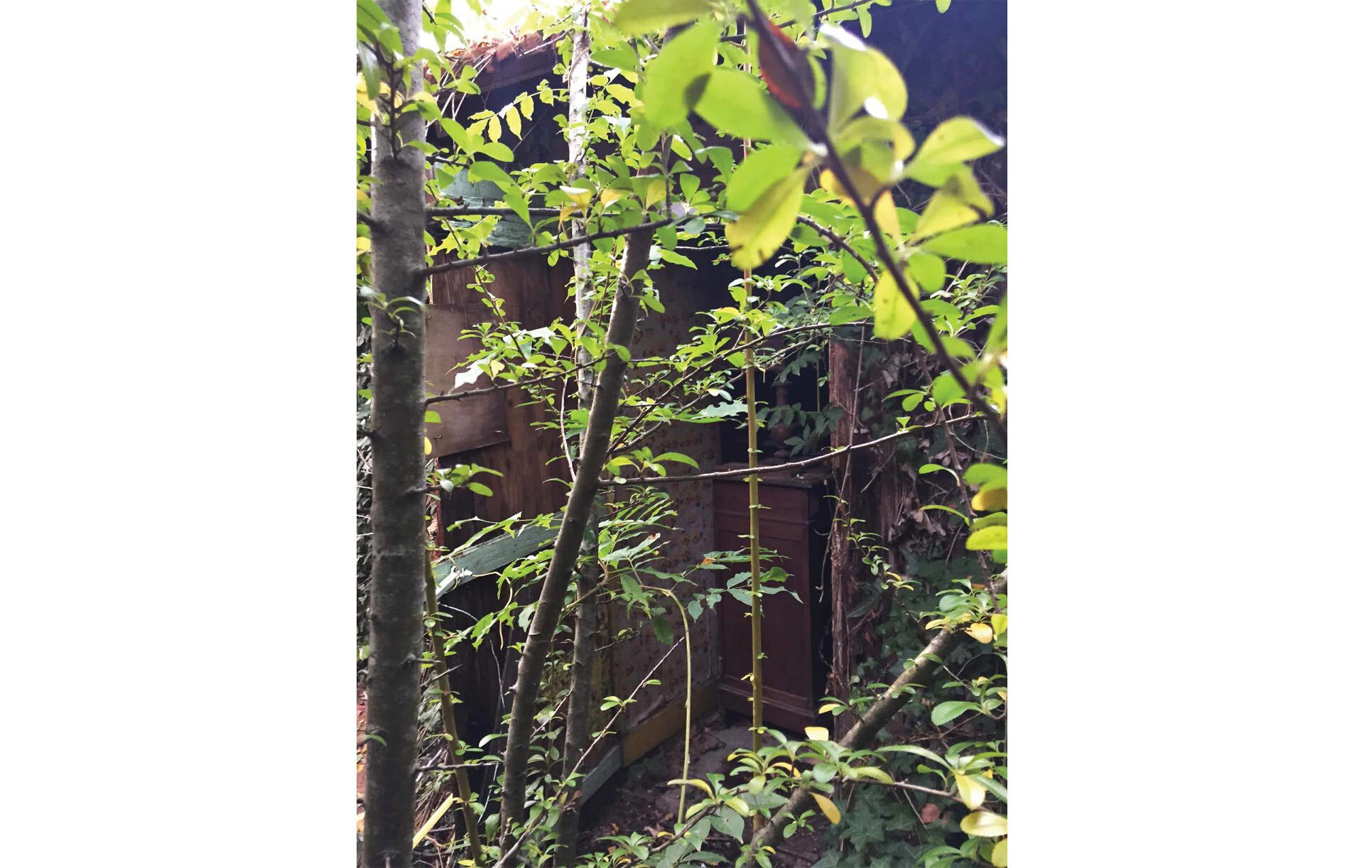 Vue sur une bâtiment délabré absorbé par la végétation.