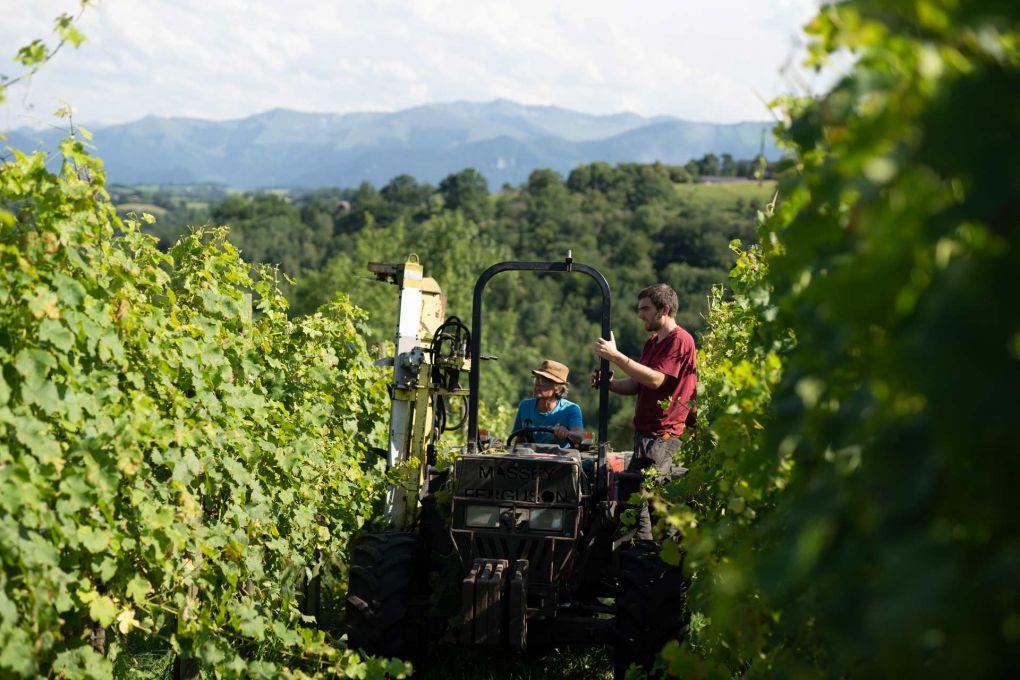 Irène, aidée de son fils, « rogne » les vignes.